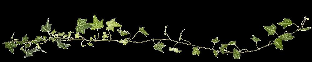 Liggende klimop plant